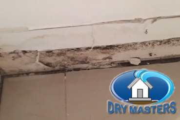 Mold removal in Plantation