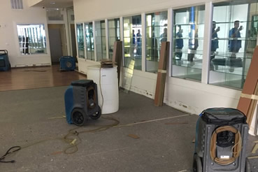 Mald removal and water damage repair in Plantation
